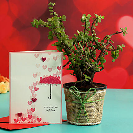 Jade Plant In Plastic Pot & Greeting Card Hand Delivery:Plant Combo For Valentines Day