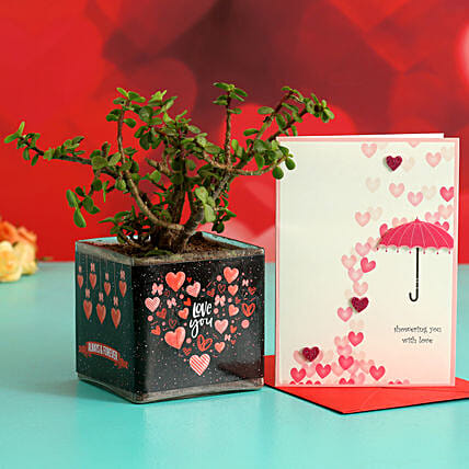 Jade Plant In Sticker Vase & Greeting Card Hand Delivery