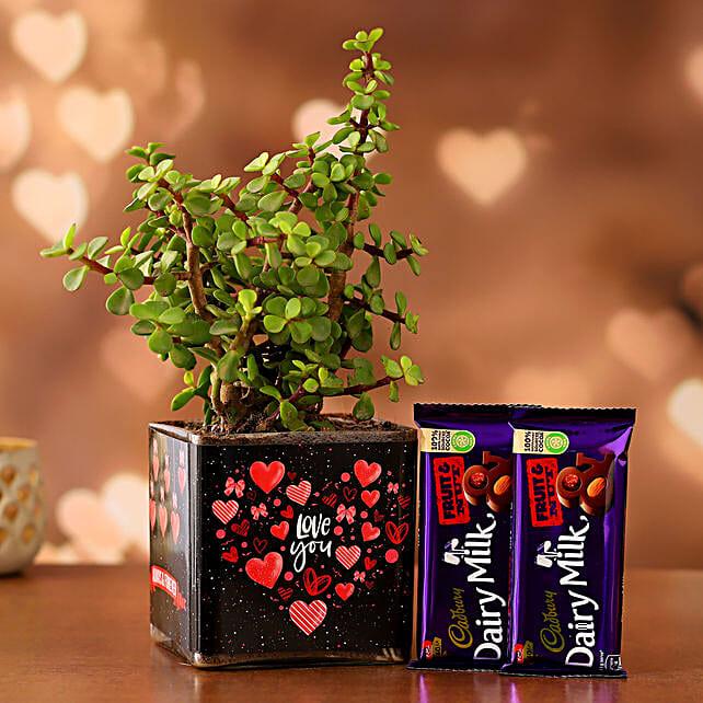 Jade Plant In Sticker Vase With Cadbury Dairy Milk Hand Delivery