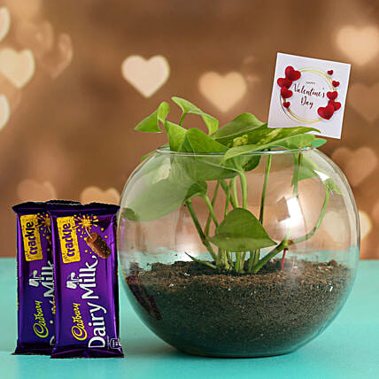 Money Plant In Glass Vase With V-Day Tag & Cadbury Crackle Hand Delivery
