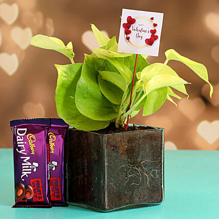Money Plant In Glass Vase With V-Day Tag & Cadbury Fruit N Nut Hand Delivery