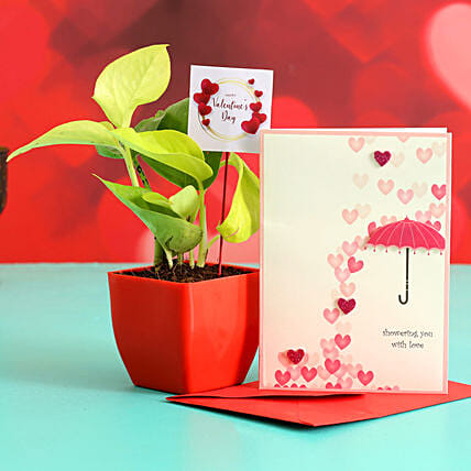 Money Plant In Plastic Pot With Greeting Card & V-Day Tag Hand Delivery