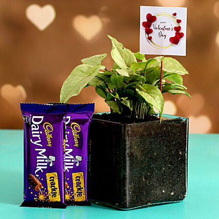 Syngonium Plant In Glass Vase With V-Day Tag & Cadbury Crackle Hand Delivery