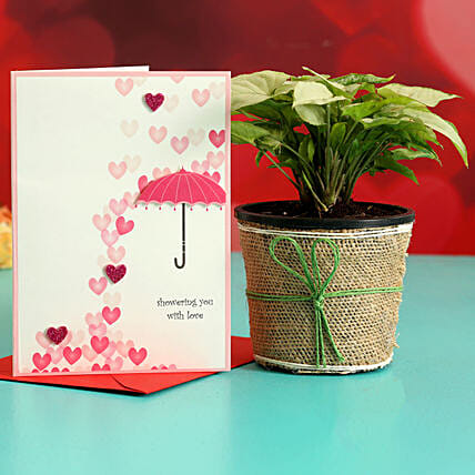 Syngonium Plant In Plastic Pot & Greeting Card Hand Delivery