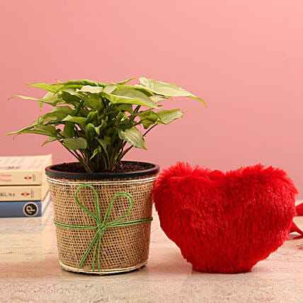 Syngonium Plant In Jute Wrapped Pot & Red Heart