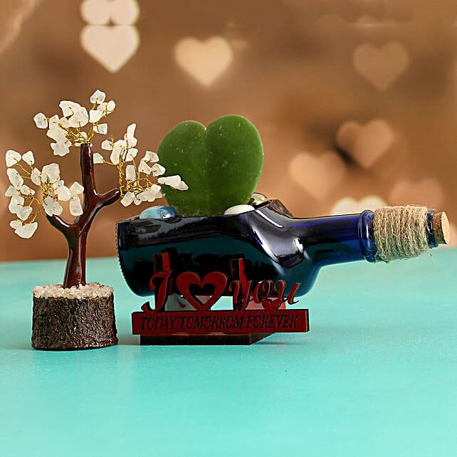 Hoya Plant In ILU Antiquity Bottle Planter Wish Tree