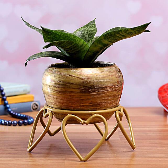 Sansevieria Green Plant In Stone Finish Trendy Pot