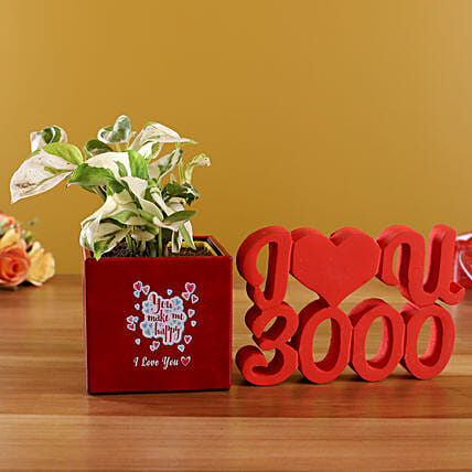 White Pothos Plant In Love Red Pot With I Love U Décor