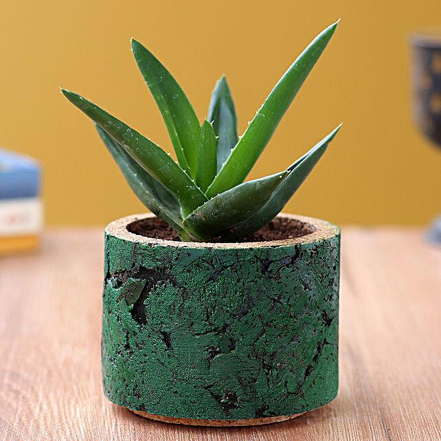 Mini Aloevera Plant In Pipe Shape Planter