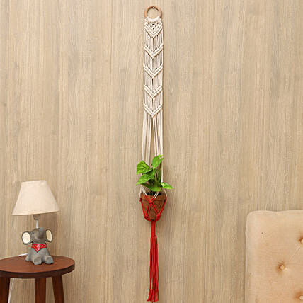 Money Plant With Coral Handcrafted Hanging Planter