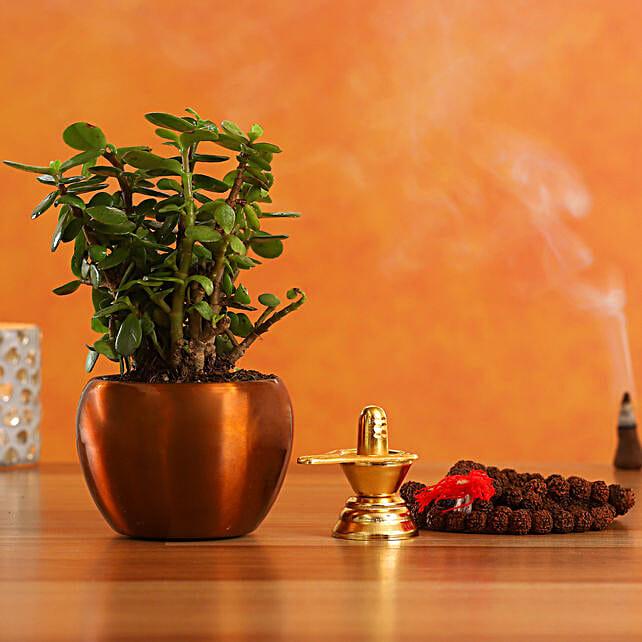 Special Shivaratri Puja Items Jade Plant
