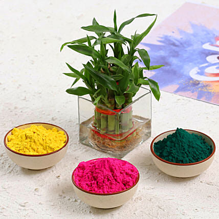 Holi Colour and Plant Gift Combo:Send Holi Colours