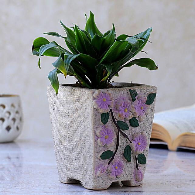 Dracaena Plant In Flower Embossed Pot