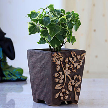 English Ivy Plant In Flower Embossed Pot