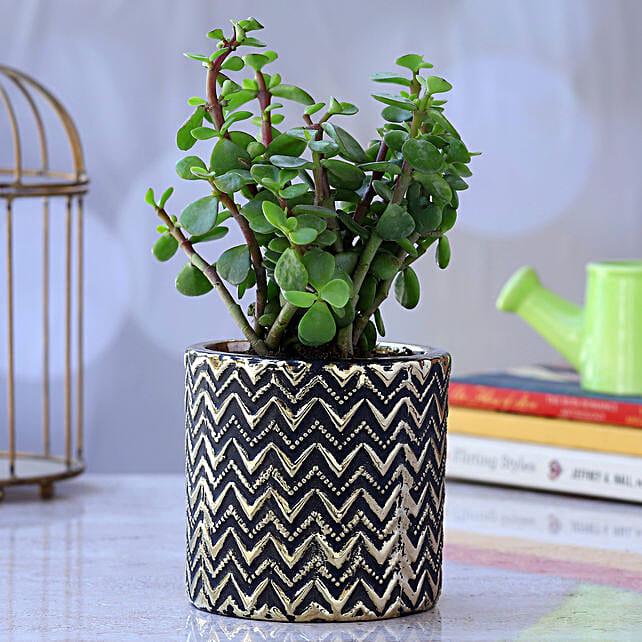 Jade Plant In Zigzag Ceramic Pot:Egyptian Art-planters