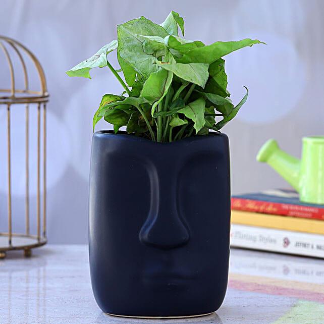 Syngonium Plant In Face Shaped Ceramic Pot:Egyptian Art-planters