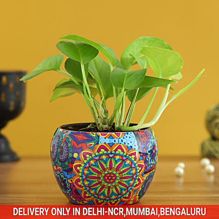 Money Plant In Colourful Rajwada Printed Pot Hand Delivery