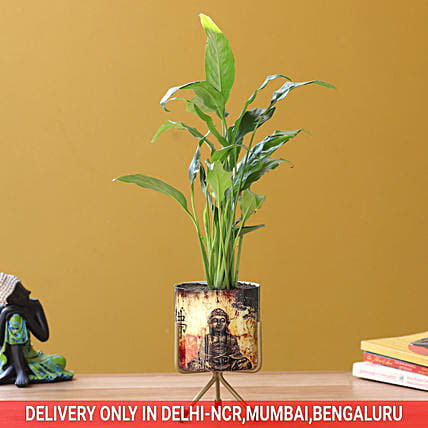 Peace Lily In Buddha Pot Hand Delivery