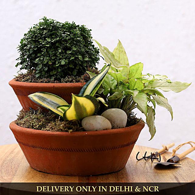 Set Of 3 Plants In Pebble Filled Terracotta Pot