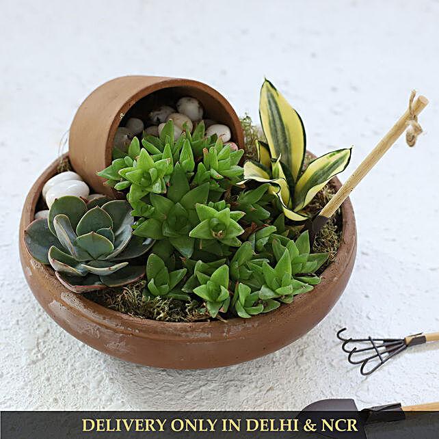 Set Of 4 Plants In Pebble Filled Terracotta Pot
