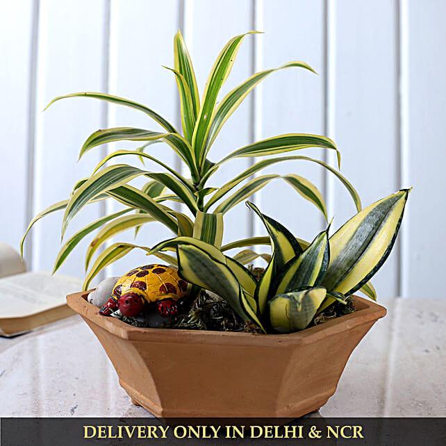 Plants Duo In Beautiful Terracotta Planter