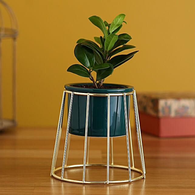 Ficus Compacta Plant In Golden Stand Ceramic Pot:Planter Stands