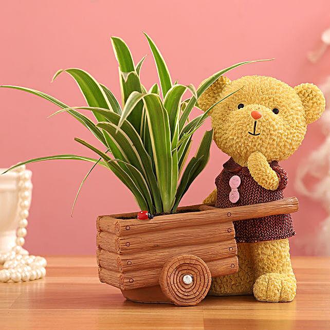 Spider Plant In Yellow Bear Cart Ceramic Pot