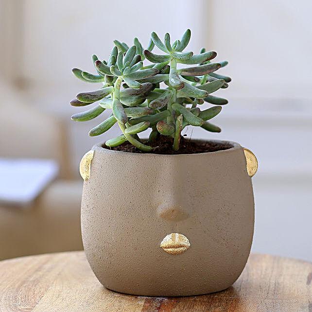 Stonecrop Plant In Grey Face Ceramic Pot:Folk Art Planters