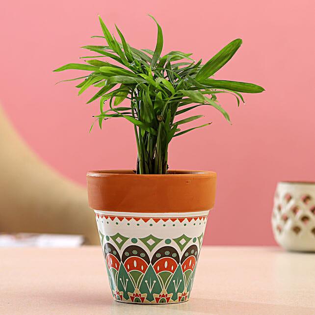 Chamaedorea Plant In White Green Ceramic Pot