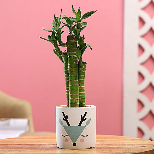 Cut Leaf Bamboo Plant In White Green Ceramic Pot:Wildlife Art planters