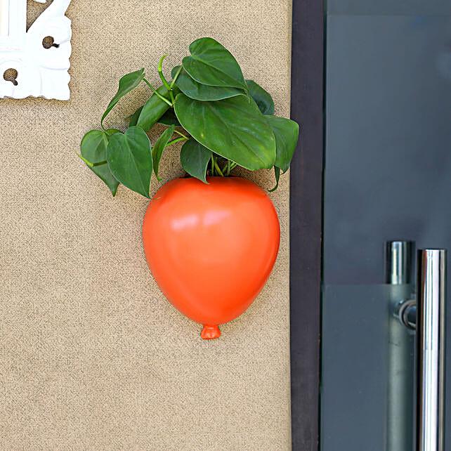 Oxycardium Plant In Orange Wall Hanging Planter