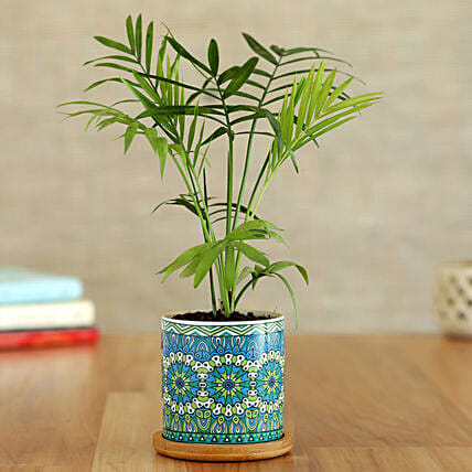 Chamaedorea Plant In Rangoli Pot With Wooden Plate