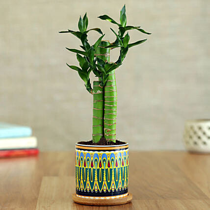 Cut Leaf Bamboo Plant In Rangoli Pot With Wooden Plate