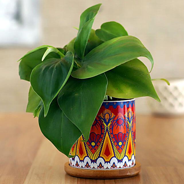 Oxycardium Plant In Red Rangoli Wooden Plate Pot