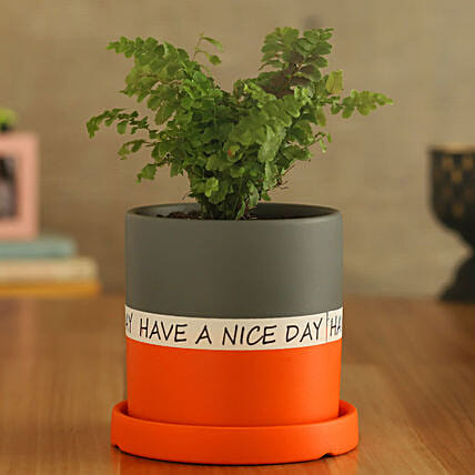 Fern Plant In Have A Nice Day Orange Plate Pot
