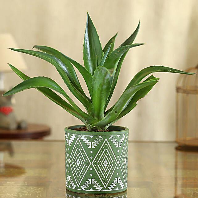 Lotus Cactus Plant In Pipe Shape Ceramic Pot