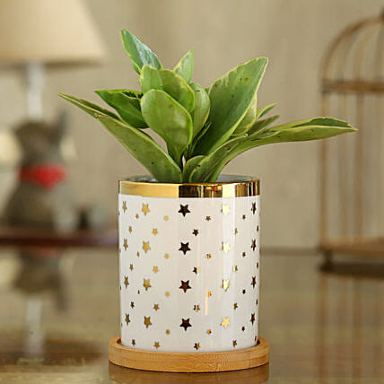 Peperomia Plant In Star Print Pot With Wooden Plate:Planter Stands