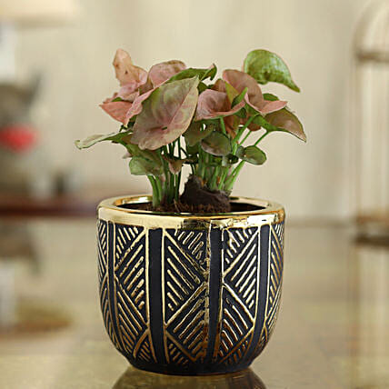 Syngonium Plant In Black And Gold Oval Pot:Egyptian Art-planters
