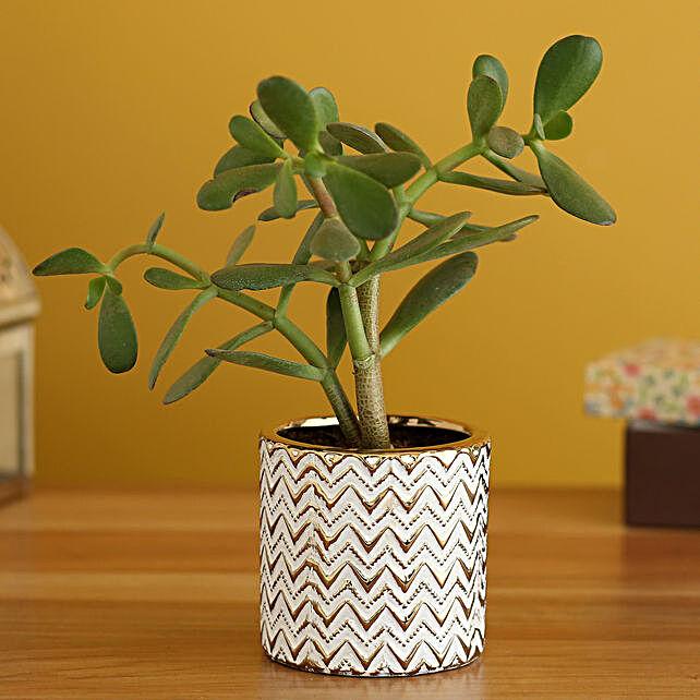 Crassula Plant In Zigzag Design Planter:Egyptian Art-planters
