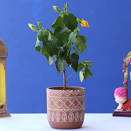 Hibiscus Plant In Brown White Tribal Print Pot:Hibiscus Plant