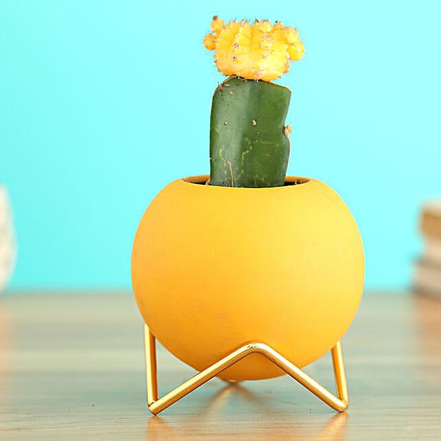 Moon Cactus Plant In Round Ceramic Planter:Planter Stands
