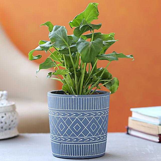 Xanadu Plant In Blue White Tribal Print Pot:Folk Art Planters