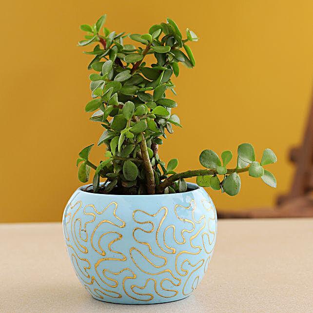 Jade Plant In Blue Enamel Print Pot