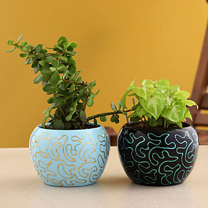 Syngonium N Jade Plant Combo In Embroidered Metal Pot