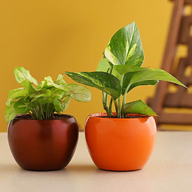 Syngonium N Money Plant Combo In Metal Pot:Plants Sets