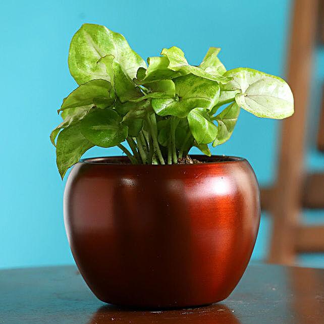 Syngonium Plant In Orange Teak Metal Pot