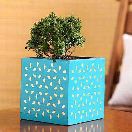 Table Kamini Plant In Teal Wooden Square Pot