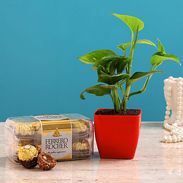Money Plant Ferrero Rocher Combo Hand Delivery