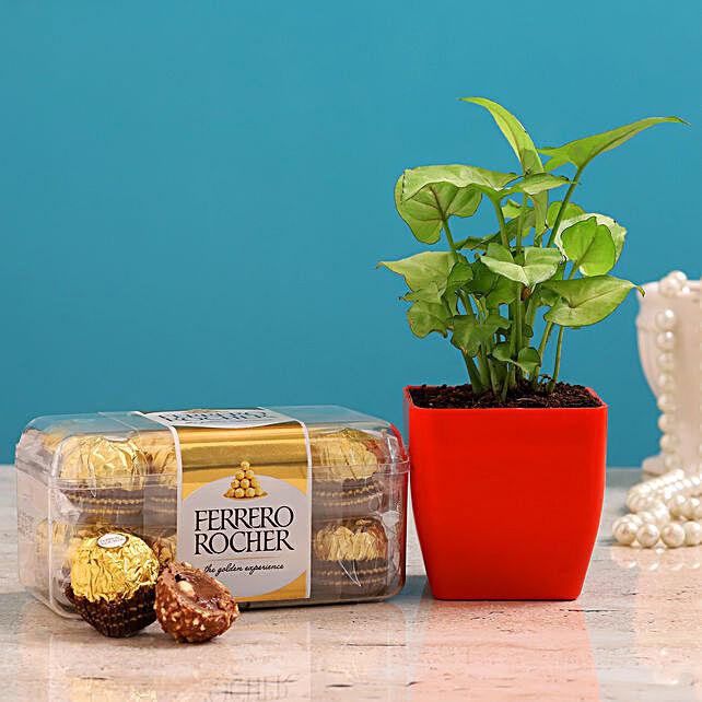 Syngonium Plant Ferrero Rocher Combo Hand Delivery