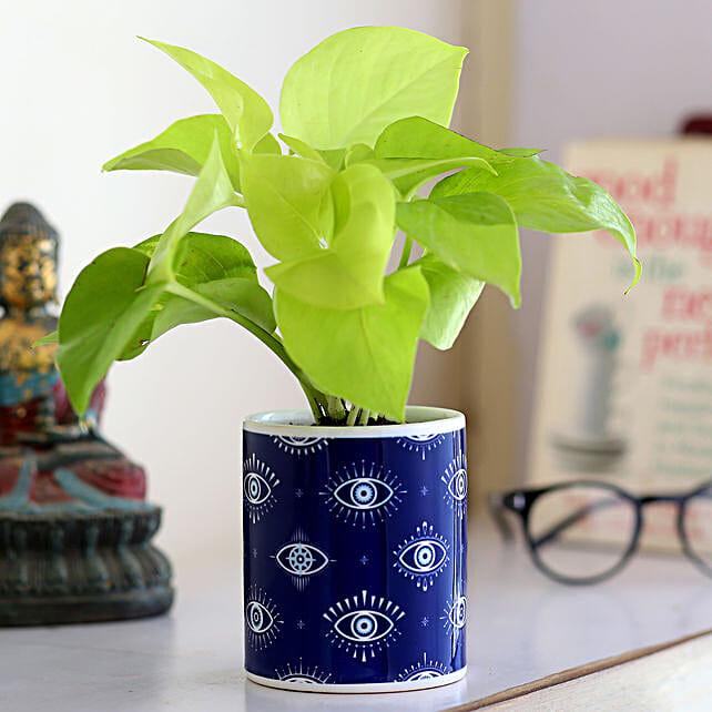 Golden Money Plant In Ceramic Printed Planter